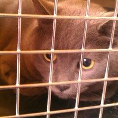 Photo taken at McKillip Animal Hospital by Natalie N. on 11/3/2012