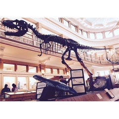 Photo taken at Musée Redpath Museum by Duc C. N. on 4/12/2015