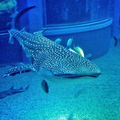 Photo taken at Osaka Aquarium Kaiyukan by Apple U. on 12/28/2012