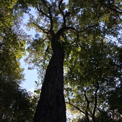 Photo taken at Congaree National Park by Sic W. on 9/20/2014