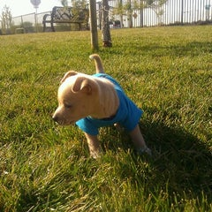 Photo taken at Easter Lily Dog Park by Ryan H. on 12/10/2011