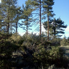 Photo taken at San Bernardino National Forest by Aim on 1/11/2013