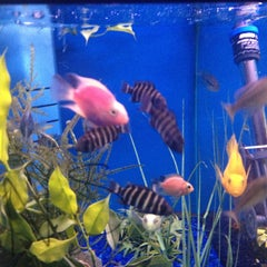 Photo taken at Moby Dick Pet Store by Jewels (Linda) S. on 4/6/2013