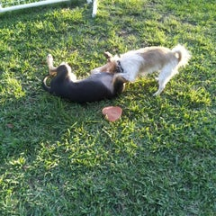 Photo taken at Waterways Dog Park by Albert M. on 2/7/2013