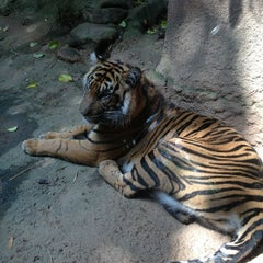 Photo taken at Zoo Atlanta by Dougal C. on 6/8/2013