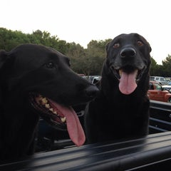 Photo taken at James Island County Park Dog Park by Jay O. on 9/18/2014