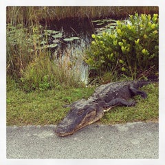 Photo taken at Big Cypress National Preserve by Johnny L. on 12/26/2012