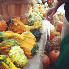 Photo taken at Sarasota Farmers Market by Shannon M. on 10/6/2012