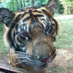 Photo taken at Zoo Atlanta by Jane K. on 10/3/2012