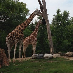 Photo taken at Lincoln Park Zoo by Kevin ⚡. on 7/7/2013