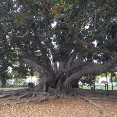 Photo taken at Moreton Bay Fig Tree by gessika.👽 on 12/1/2014