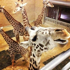 Photo taken at Houston Zoo by Claire W. on 2/24/2013