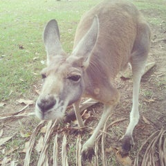 Photo taken at Australia Zoo by Dmytro O. on 1/22/2013
