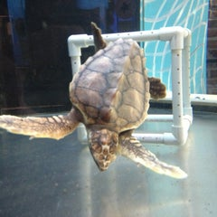 Photo taken at Georgia Sea Turtle Center by Jason S. on 3/10/2013