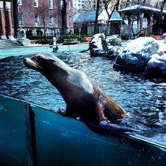 Photo taken at Central Park Zoo by Christopher C. on 1/26/2013