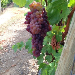 Photo taken at Woodenhead Vintners by Kyle M. on 8/3/2014