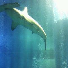 Photo taken at 海遊館 (Osaka Aquarium Kaiyūkan) by Shin-Yah-man! H. on 12/30/2012