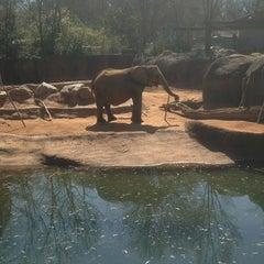 Photo taken at Zoo Atlanta by Larry J. on 3/10/2013