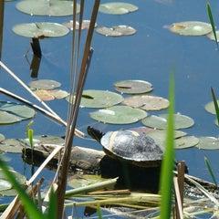 Photo taken at Seward Park by Big S. on 6/26/2013