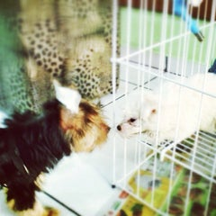 Photo taken at Pet Shop York News by Marcos R. on 7/5/2013
