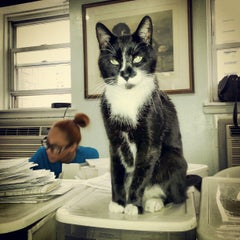 Photo taken at Humane Society of NY by Eunice N. on 4/19/2013
