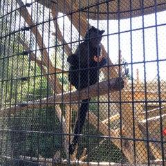 Photo taken at Monkey Exhibit by Georgia K. on 12/28/2013