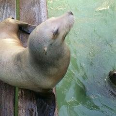 Photo taken at Morro Bay Aquarium by Matthias S. on 4/16/2015