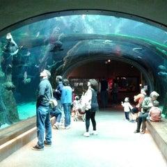 Photo taken at Steinhart Aquarium by Felipe O. on 3/21/2012