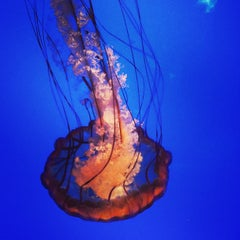 Photo taken at California Academy of Sciences by Lauren R. on 7/28/2013