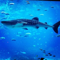 Photo taken at Georgia Aquarium by Breton S. on 2/23/2013