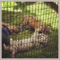 Photo taken at Natural Bridge Zoo by Brad M. on 5/25/2013