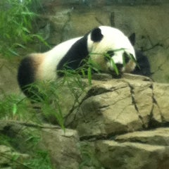 Photo taken at Smithsonian National Zoological Park by Erica B. on 7/13/2013