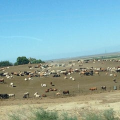 Photo taken at Harris Ranch Cattle Yards by Erica💎 on 6/30/2014