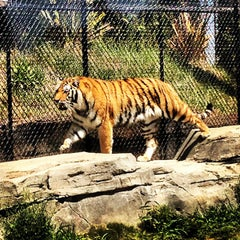 Photo taken at Odin's Temple of the Tiger by Lear C. on 4/29/2013