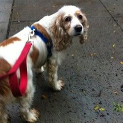 Photo taken at Humane Society of NY by micilin o. on 10/19/2012