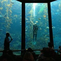 Photo taken at Monterey Bay Aquarium by Tak M. on 2/3/2013