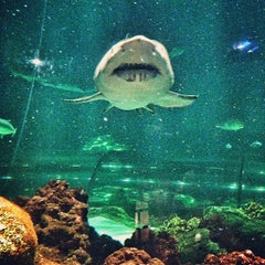 Photo taken at Sharks Underwater Grill by Miguel G. on 1/17/2013