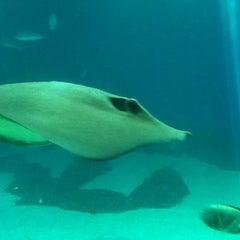 Photo taken at Maui Ocean Center, The Hawaiian Aquarium by Svetlana🍭 S. on 9/15/2012