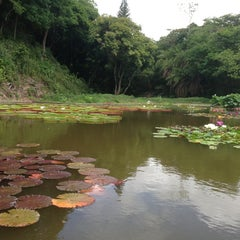 Photo taken at Jardín Botánico de Caracas by Francisco H. on 6/20/2013