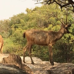 Photo taken at Nehru Zoological Park by Sana A. on 12/30/2013