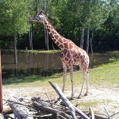 Photo taken at Minnesota Zoo by Dominick W. on 6/16/2013
