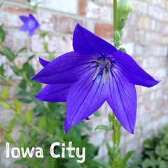 Photo taken at Iowa City, IA by Gregory J. on 8/13/2013