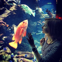 Photo taken at Steinhart Aquarium by Jane L. on 4/3/2013