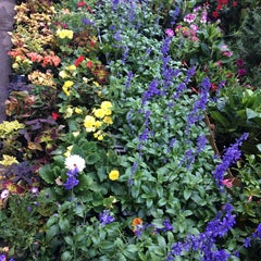 Photo taken at Flower District by Jess O. on 5/8/2015