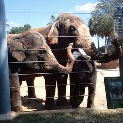 Photo taken at Houston Zoo by John M. on 10/4/2012