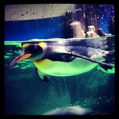 Photo taken at SEA LIFE Melbourne Aquarium by Natalia W. on 1/8/2013