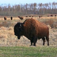Photo taken at Elk Island National Park by J on 6/3/2013