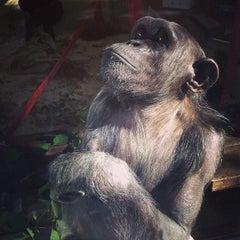 Photo taken at Monkey World - Ape Rescue Centre by Darren W. on 10/10/2013