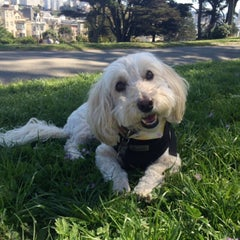 Photo taken at Alamo Square Dog Park by Laura G. on 5/1/2016