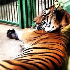 Photo taken at Zoo Praha | Prague Zoo by Evgenia on 10/16/2012